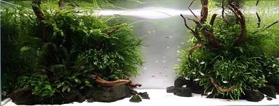 aquarium bodengrund kies sand oder soil. Black Bedroom Furniture Sets. Home Design Ideas
