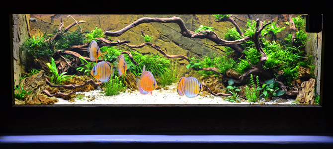 Biconeo Aquascaping : Aquascaping Projekte und Referenzen - Biconeo Aquascaping