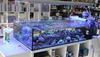 biconeo aquaristik