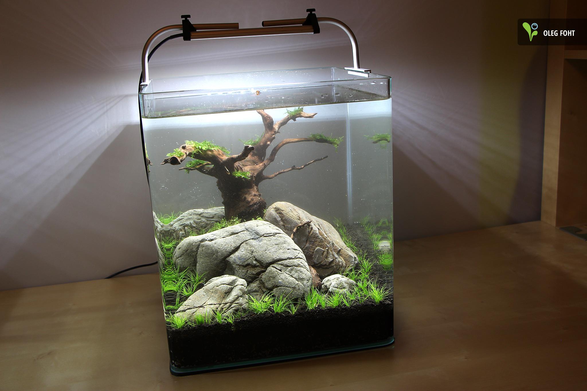 bicostone herzstein der ideale stein f r das aquascaping naturaquarium nano aquarium. Black Bedroom Furniture Sets. Home Design Ideas