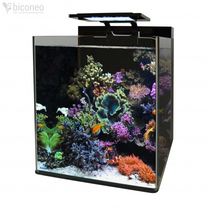 biconeo aquaristik und aquascaping shop s wasser meerwasser. Black Bedroom Furniture Sets. Home Design Ideas