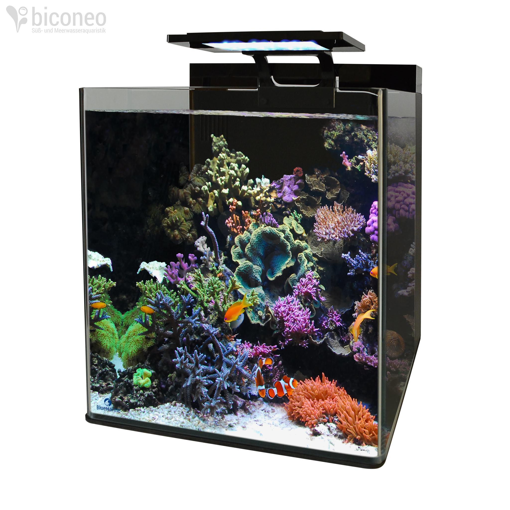 blue marine reef 60. Black Bedroom Furniture Sets. Home Design Ideas