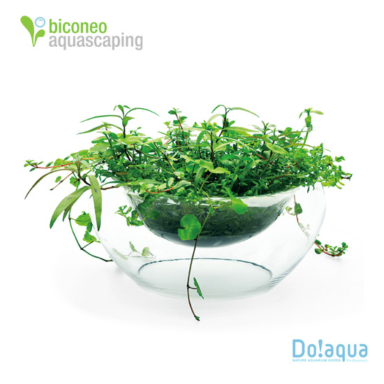 doaqua plant glass oasis biconeo aquascaping. Black Bedroom Furniture Sets. Home Design Ideas