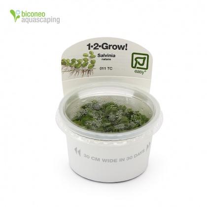 Wasserpflanzen, In Vitro Wasserpflanzen - Biconeo Aquascaping
